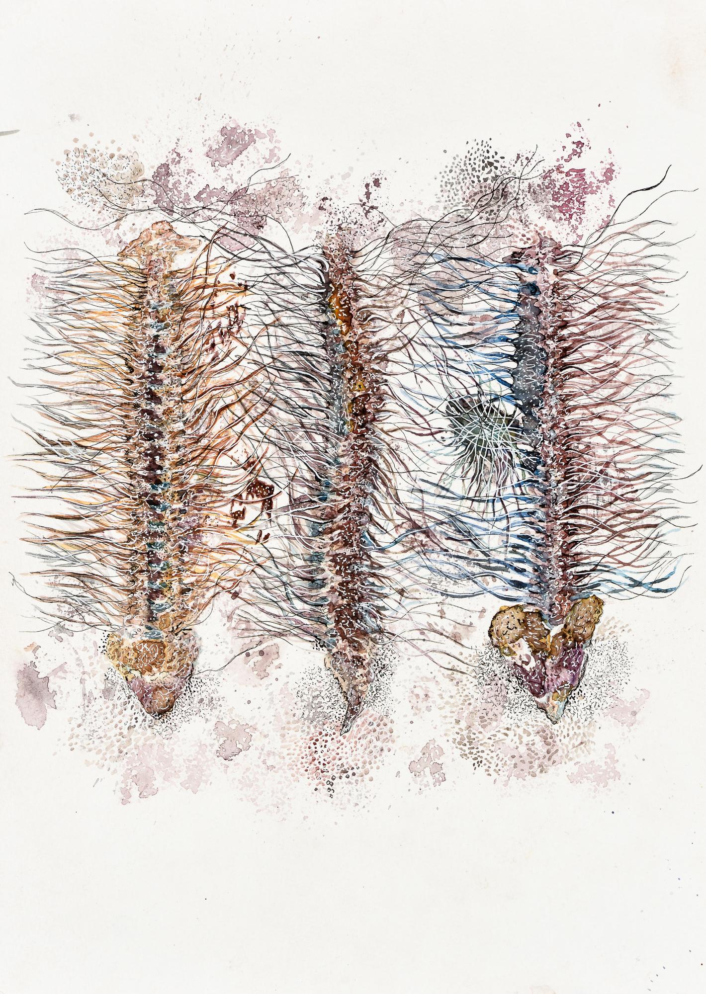 Devika Sundar, water colour on paper, organs