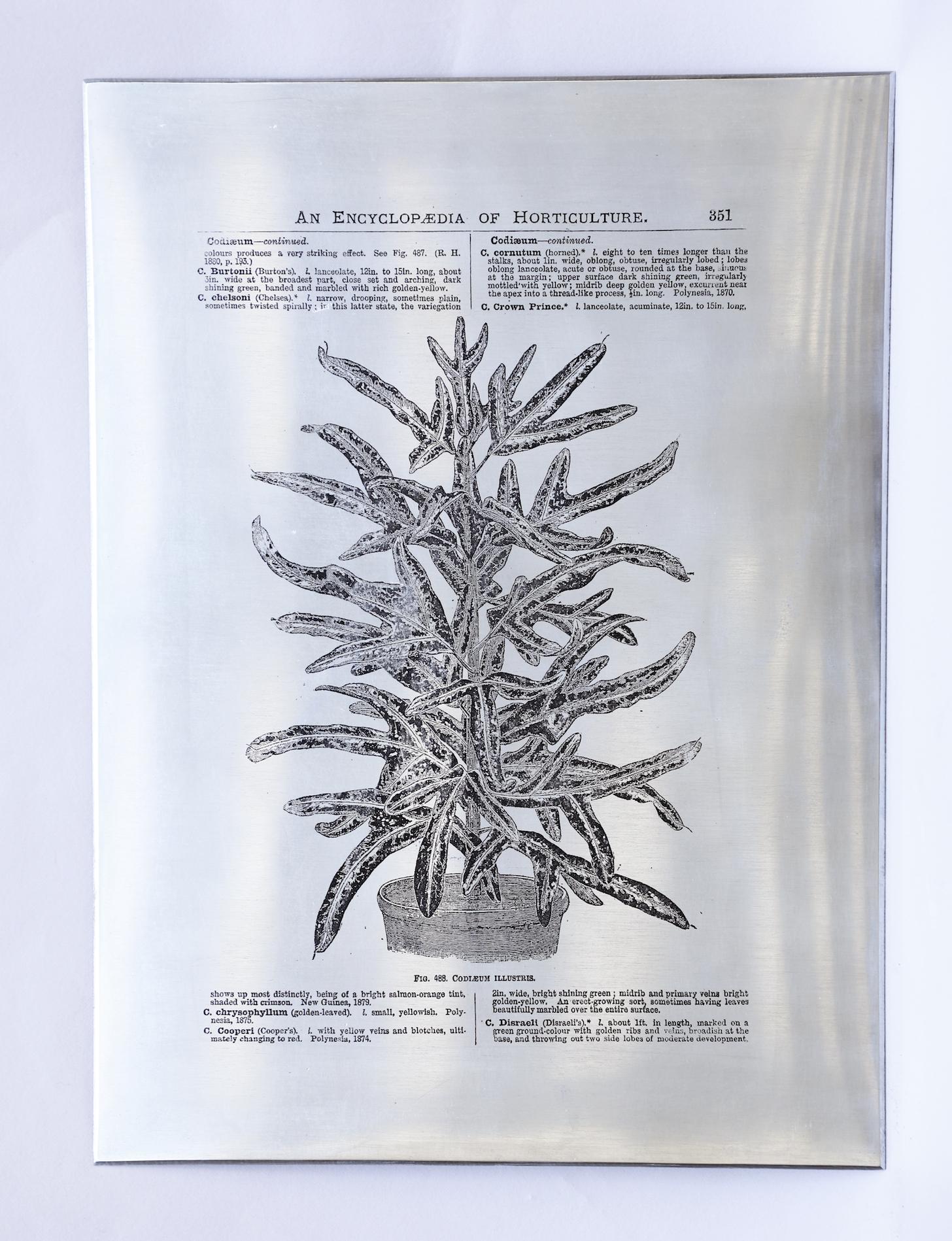 Heat Transfers on Zinc Plate by Sarasija Subramanian