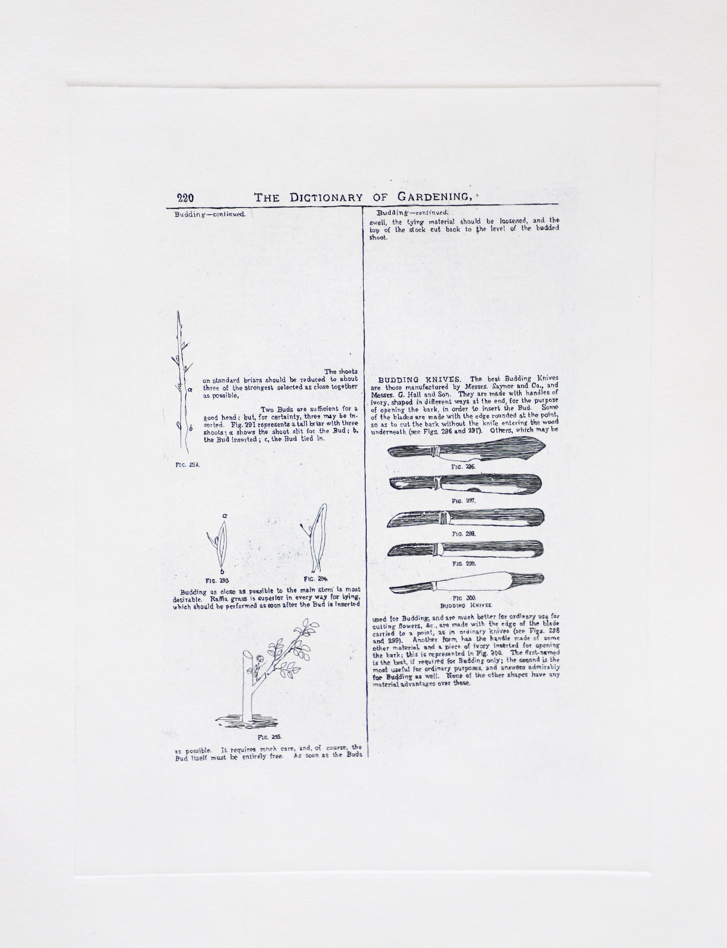 Budding Knives, Etching  by Sarasija Subramanian