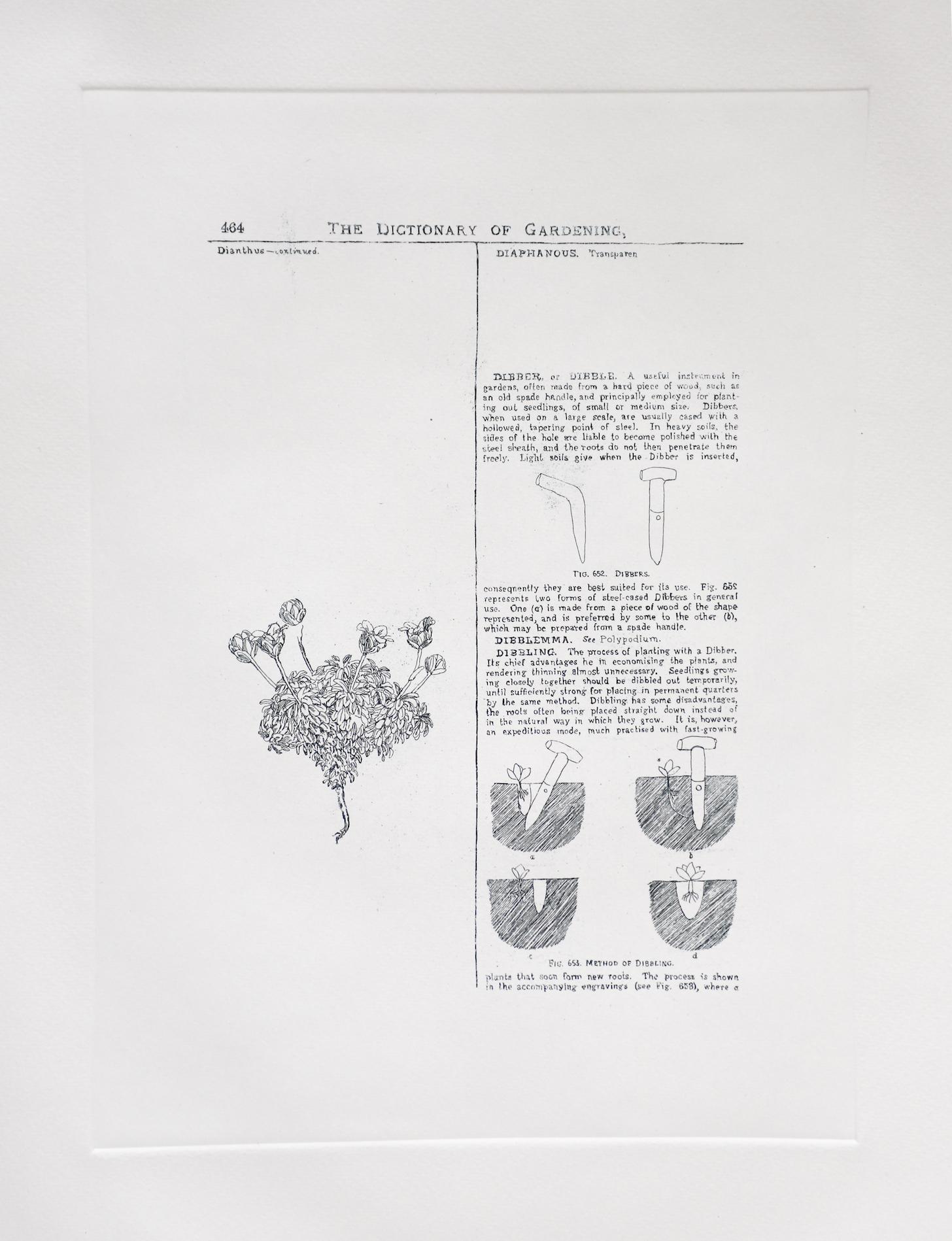 Dibbling, Etching  by Sarasija Subramanian